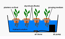 How to Build a Deep Water Culture Hydroponic System » DIY Guides