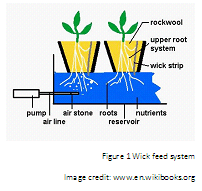 How to Grow Plants the Hydroponic Way » DIY Guides