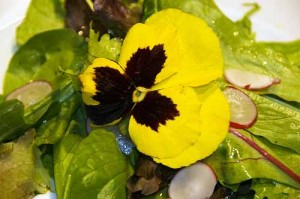 mesclun-salad-with-flower