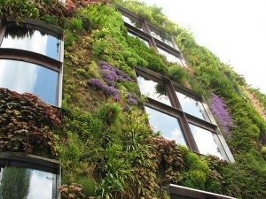 vertical wall by patrick blanc2 300x225 Building a Vertical Garden