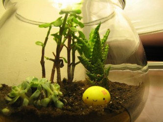 How To Create A Low Light Terrariumdiy Guides
