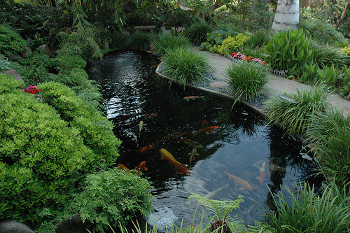 Turn a pool sand filter into a koi pond bead filterdiy for Pool to koi pond conversion